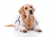 WebMD for Dogs