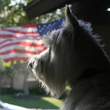 Tips For Keeping Your Dog Calm on July 4th