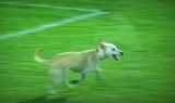 Watch This Dog Have Fun On A Soccer Field