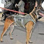 hero hound