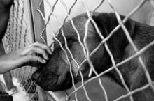 October is National Adopt A Shelter Dog Month