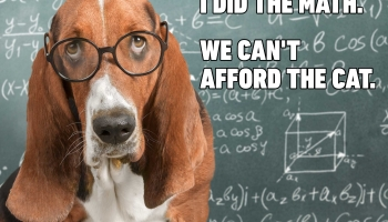 I Did The Math. We Can't Afford The Cat.