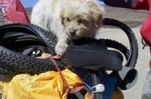 Stray Dog Follows Cyclists For Over 1,000 Miles