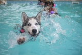 How To Keep Your Dog Cool In Hot Weather