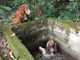 Dog Stays With Friend That Fell Into Cistern
