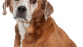 Dog DNA Test Reviewed: What Breed Is My Dog?