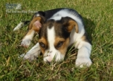 5 Tips For Puppy Potty Training